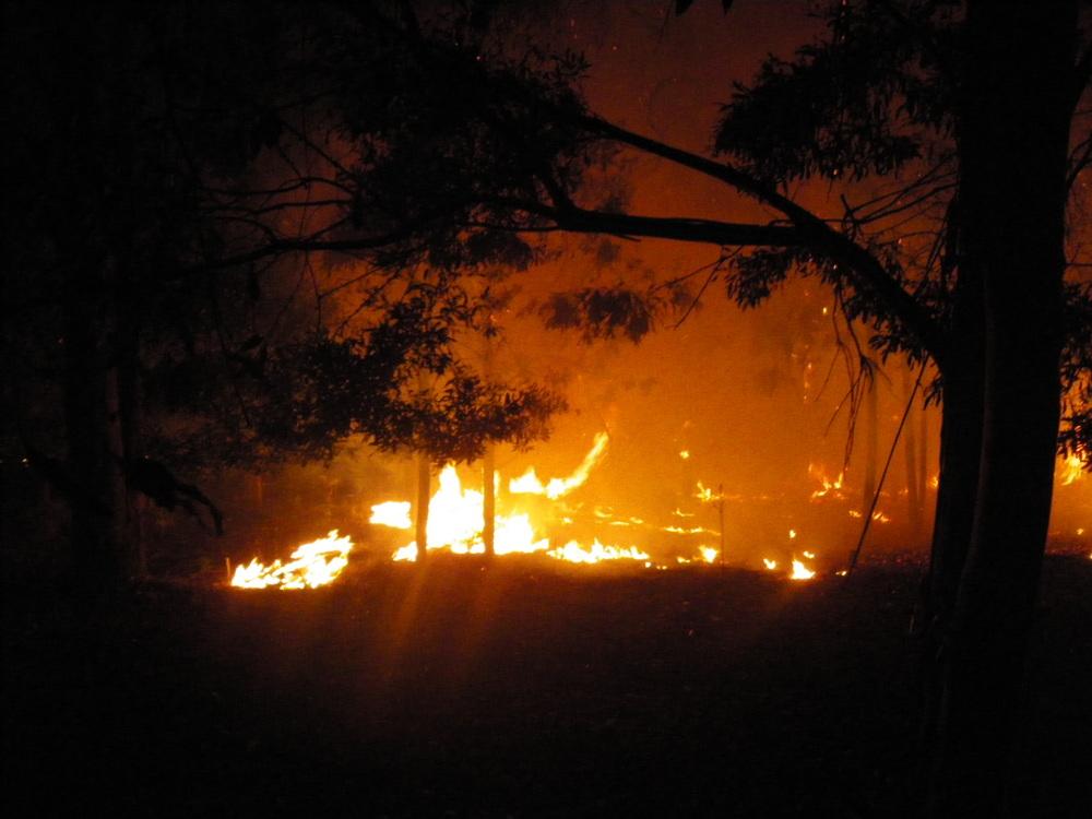 Bush Flames.JPG