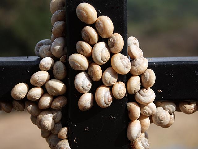 snail-on-fence.jpg