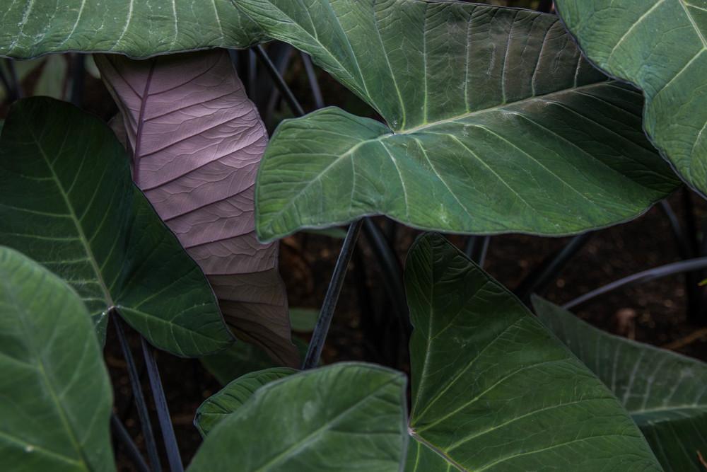 Botanischer Garten_3830.jpg