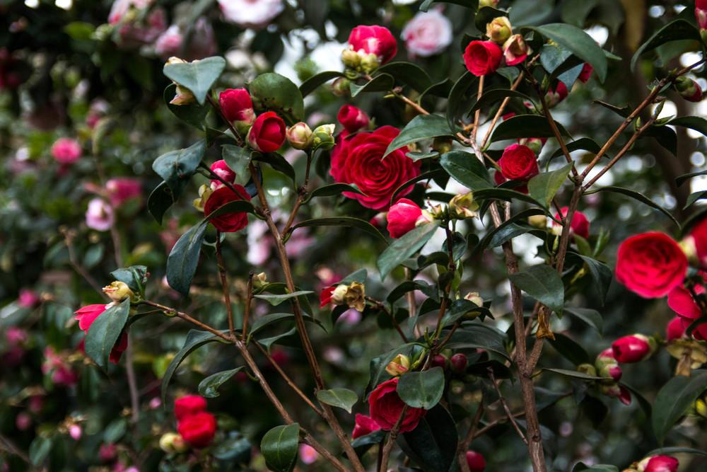 Botanischer Garten_3895-2.jpg
