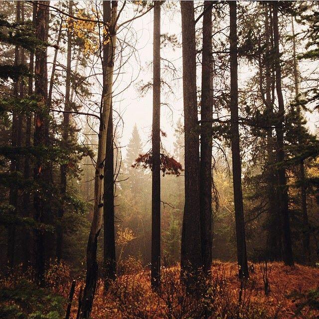 Наш скоковский лес - главное не заблудиться)