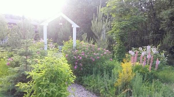 Райский уголок в Skokovo park. Фото Марии, бывшей хозяйки шалеVerona, приехавшей к нам в гости