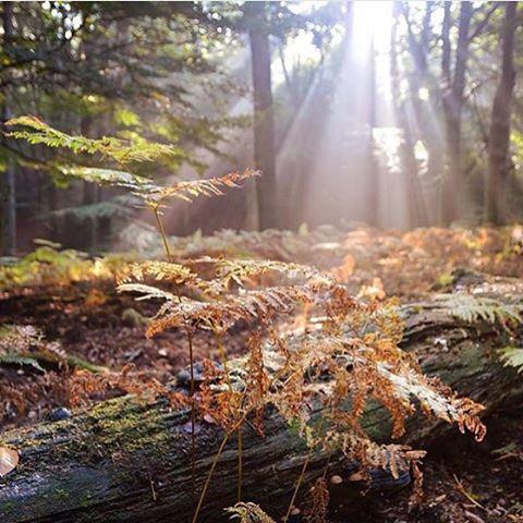 У нас можно погулять и в лесной тишине,и в парковой зоне