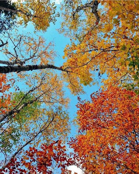 Хватит сидеть дома, у нас прекрасно можно прогуляться и полюбоваться разноцветной листвой)