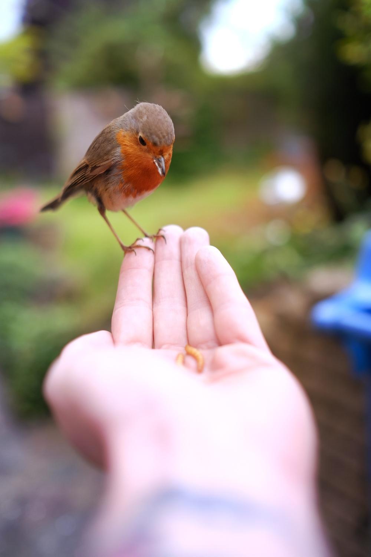 Robin Portrait 2.jpg