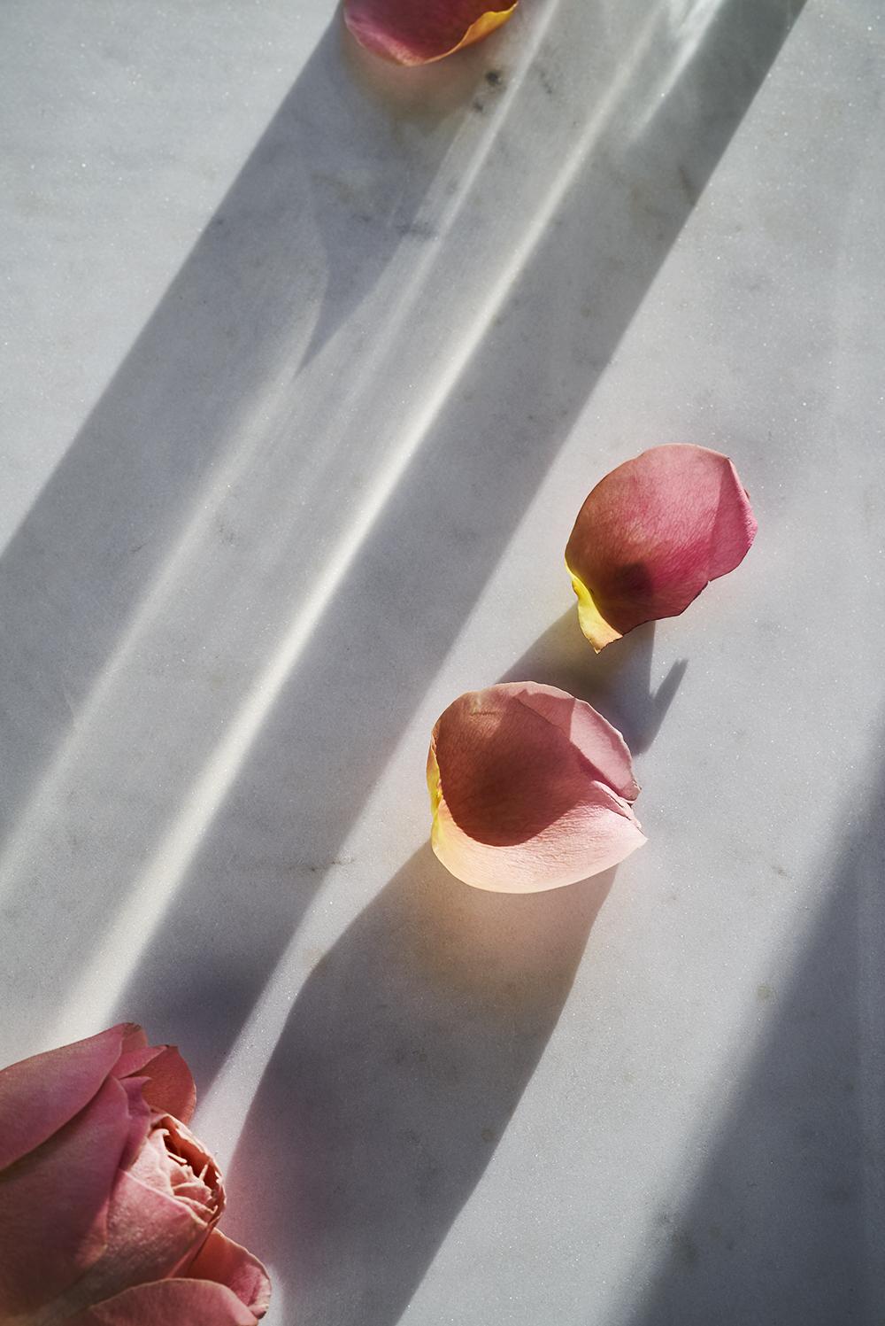 pinkpetals_sm.jpg