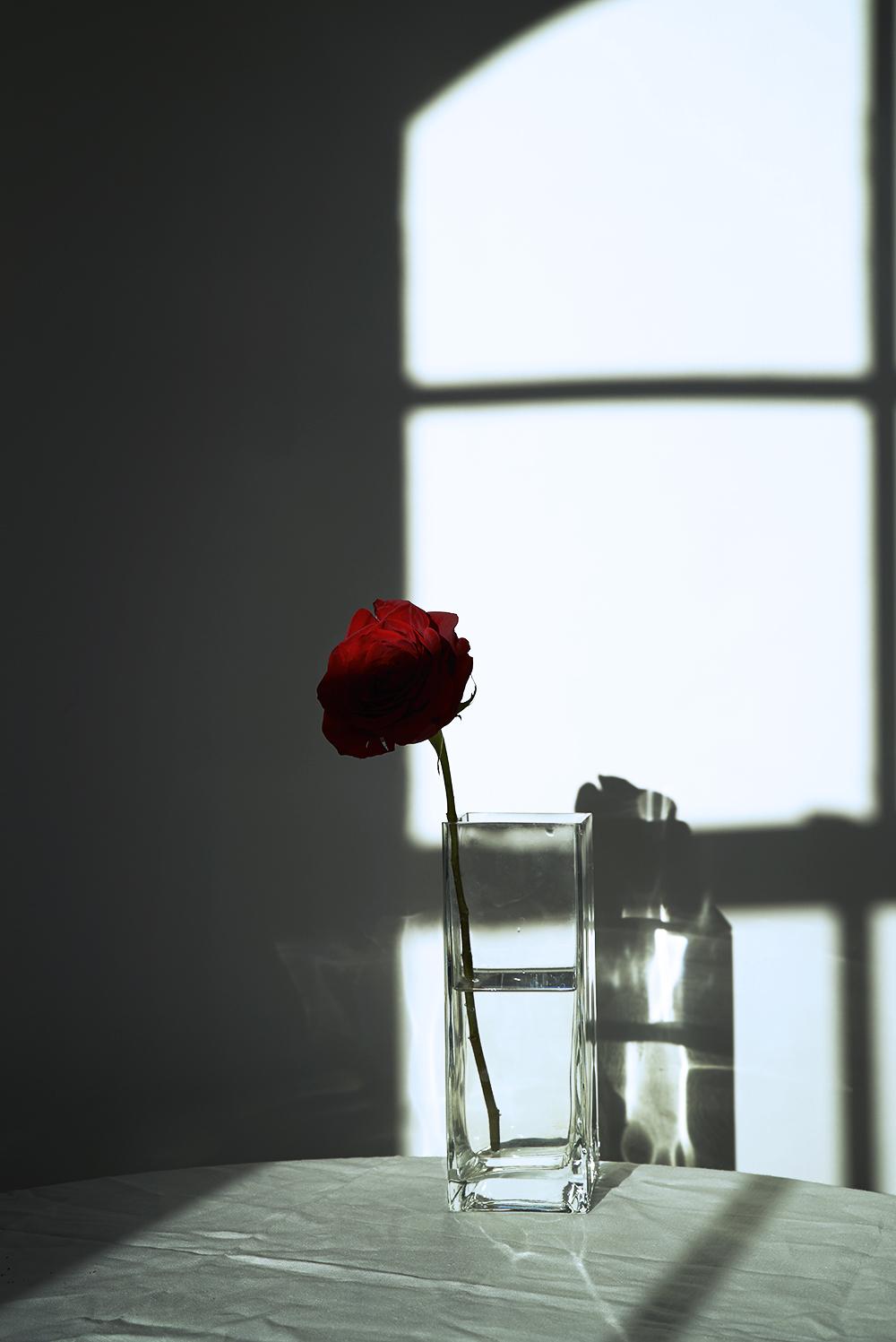 rose1_sm.jpg