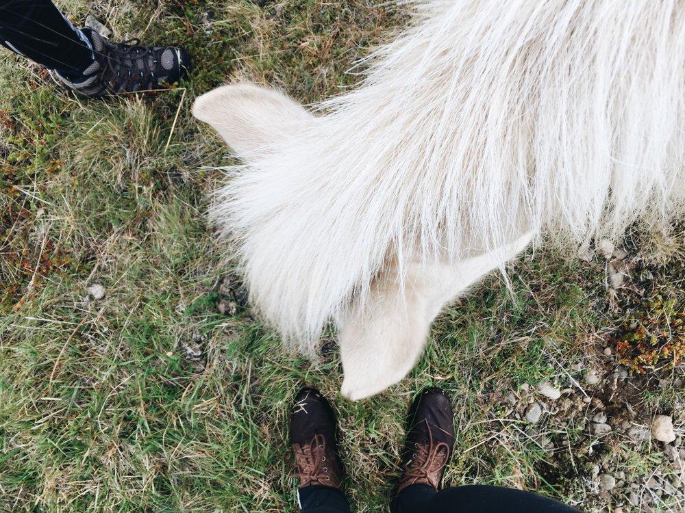 Unicorn, Snaelfessness Peninsula