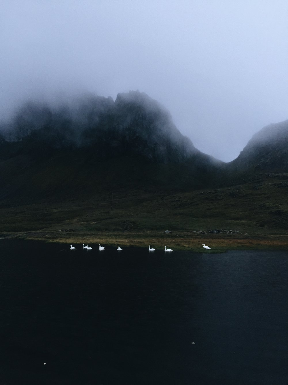 Copy of Swans in the Evening, East Iceland