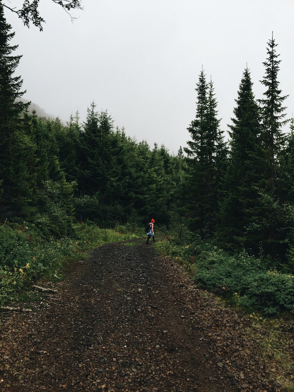 Copy of Hallormsstaður National Forest