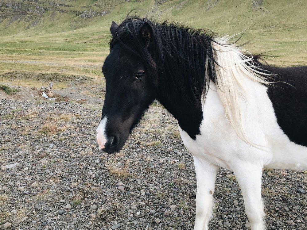 Shy Horse II, Hvalfjörður