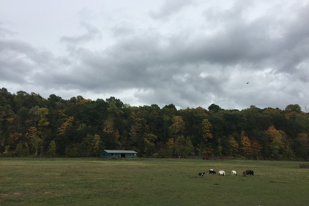 Catskills Animal Sanctuary / October 2016