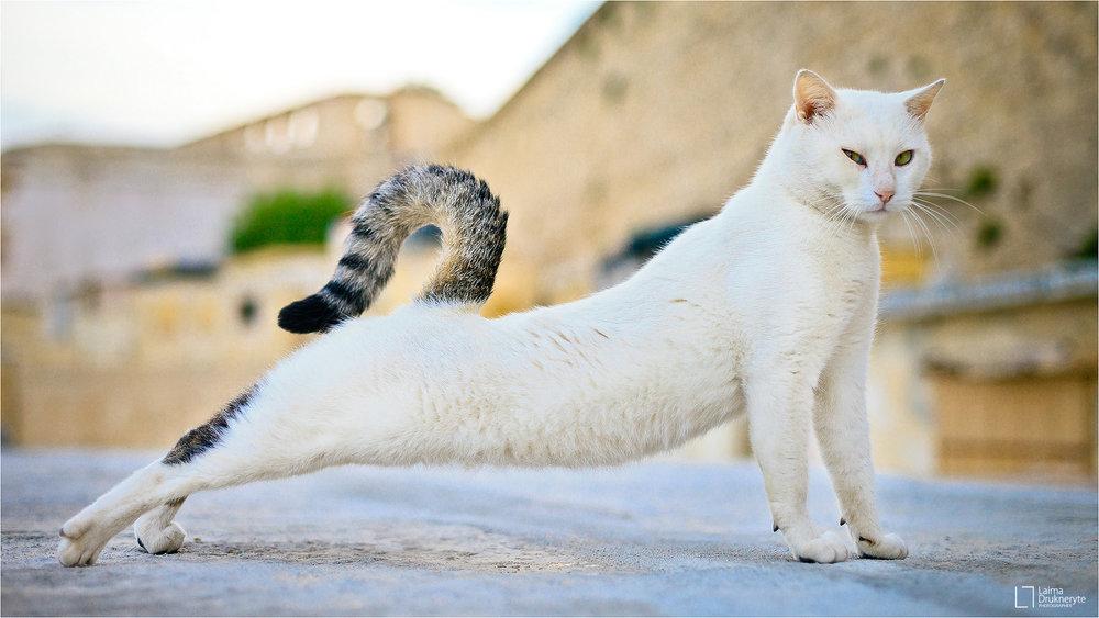 Gatos del mundo por Laima Drukneryte
