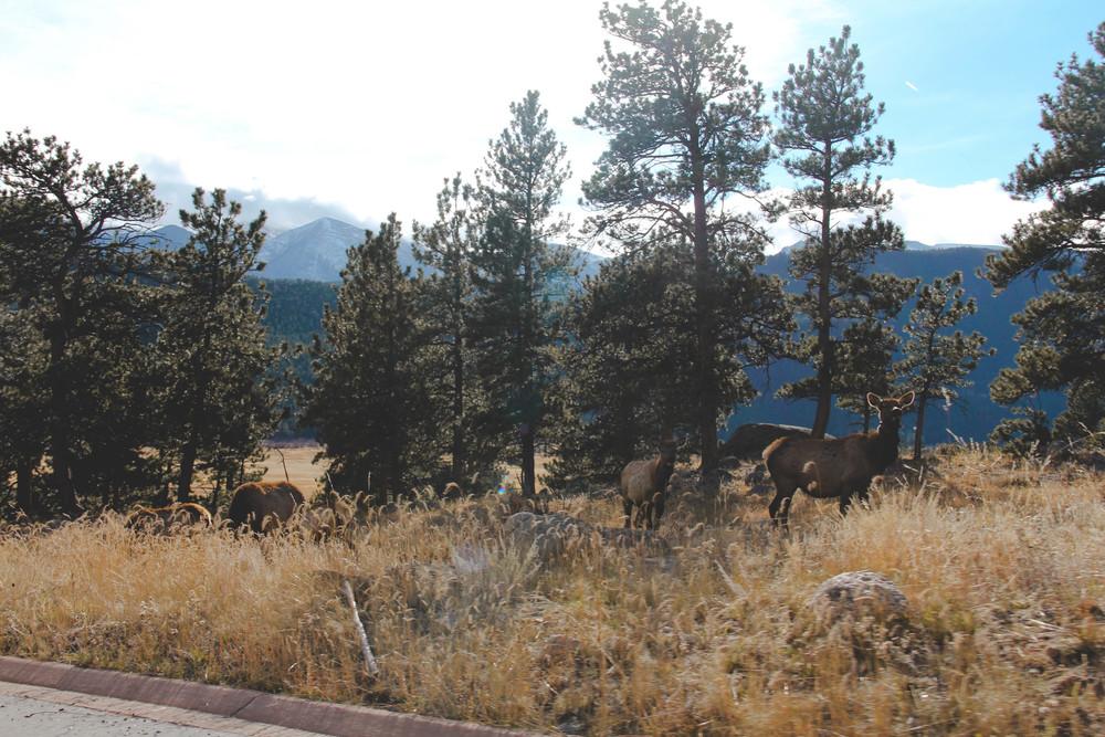 Colorado-114-2.jpg