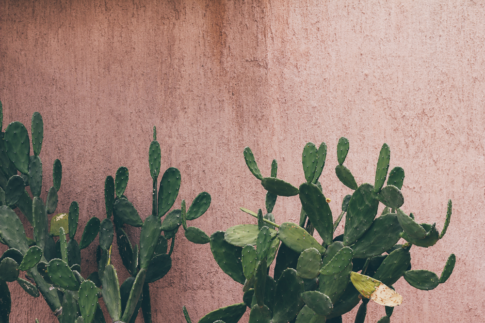 Un cactus