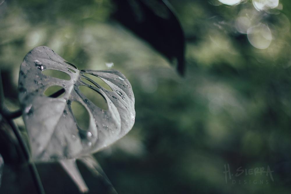 Favorite Leaves
