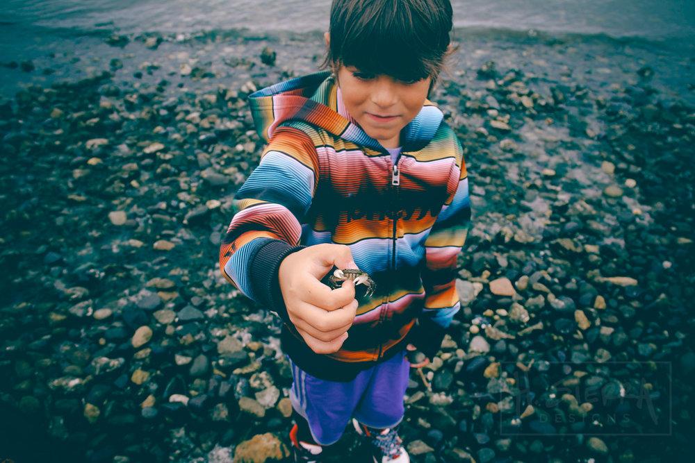 Crabs in Mulkiteo (Seattle, Washington)
