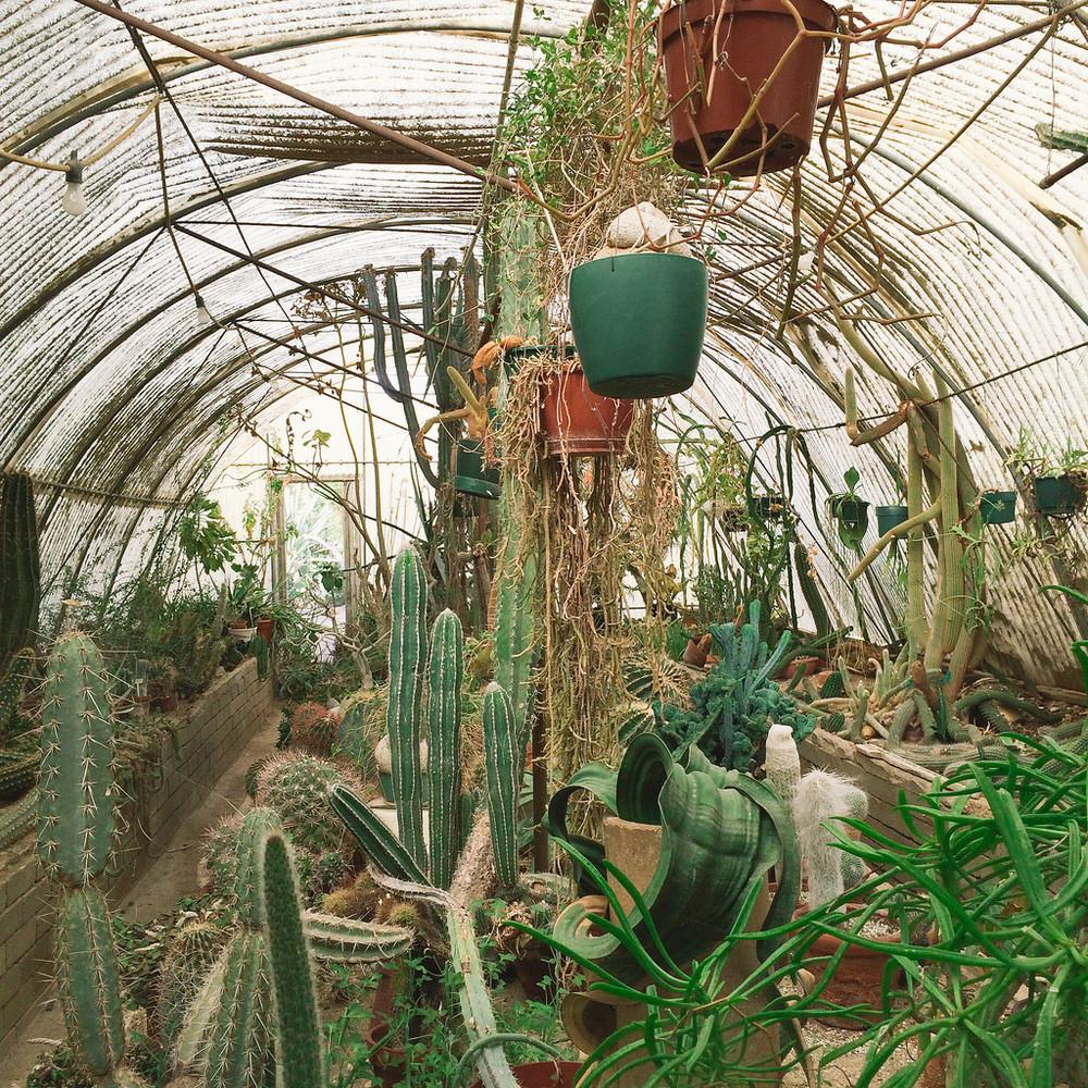 Moorten Botanical Garden  —A cute little cactarium.