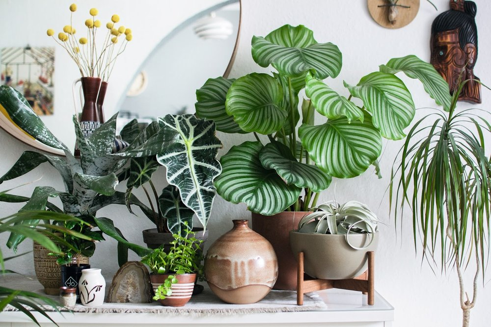 Urban jungle living and styling with plants old brand new for Decoration urban jungle