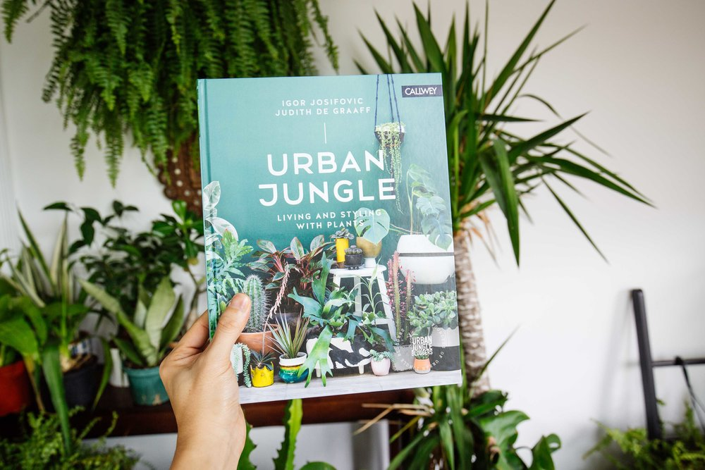 Urban jungle living and styling with plants d coration for Decoration urban jungle