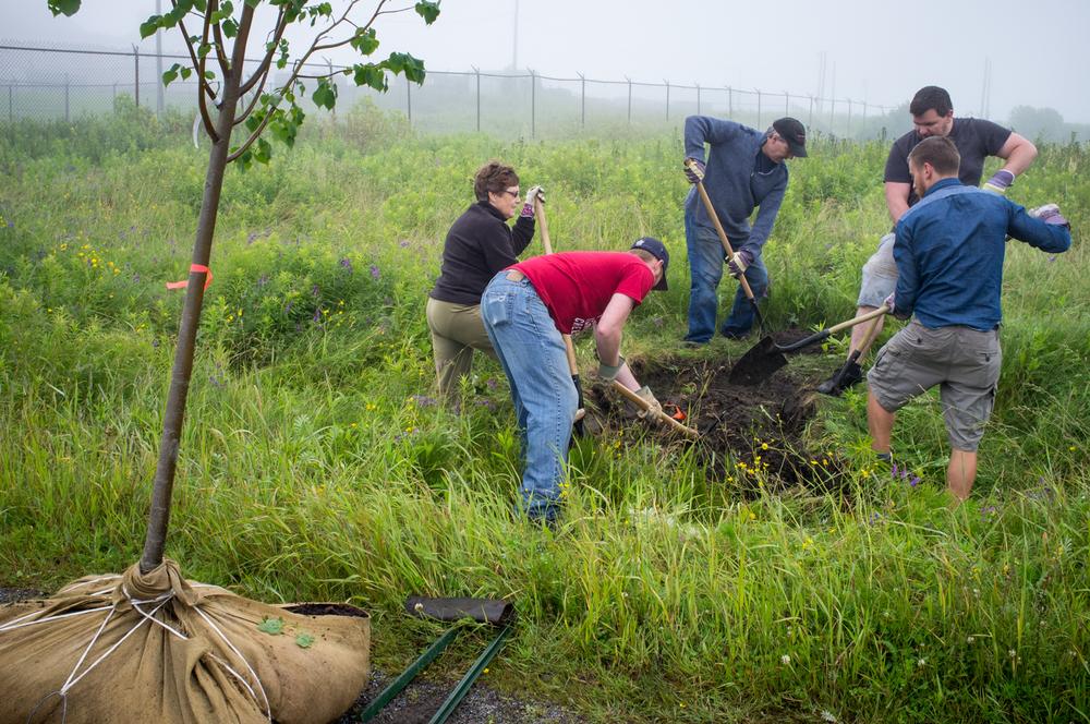 ACAPtree-planting-GBarfoot-12.jpg