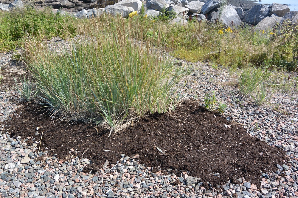 Soil was spread for American Dune Grass.