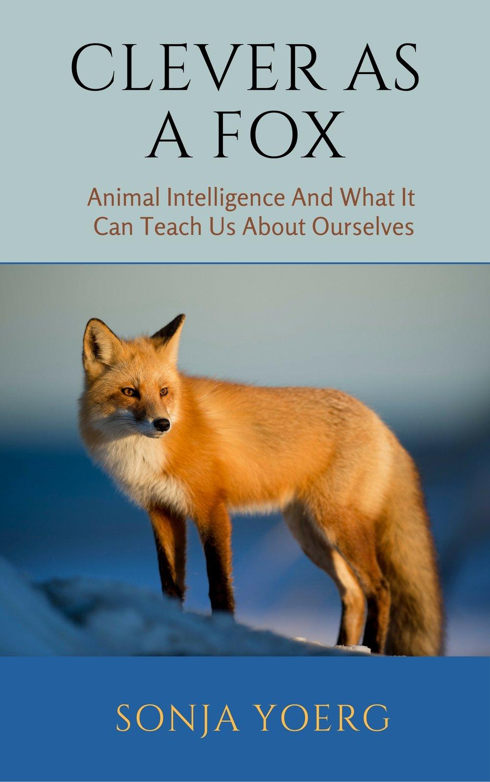 CLEVER ASA FOX (2).jpg