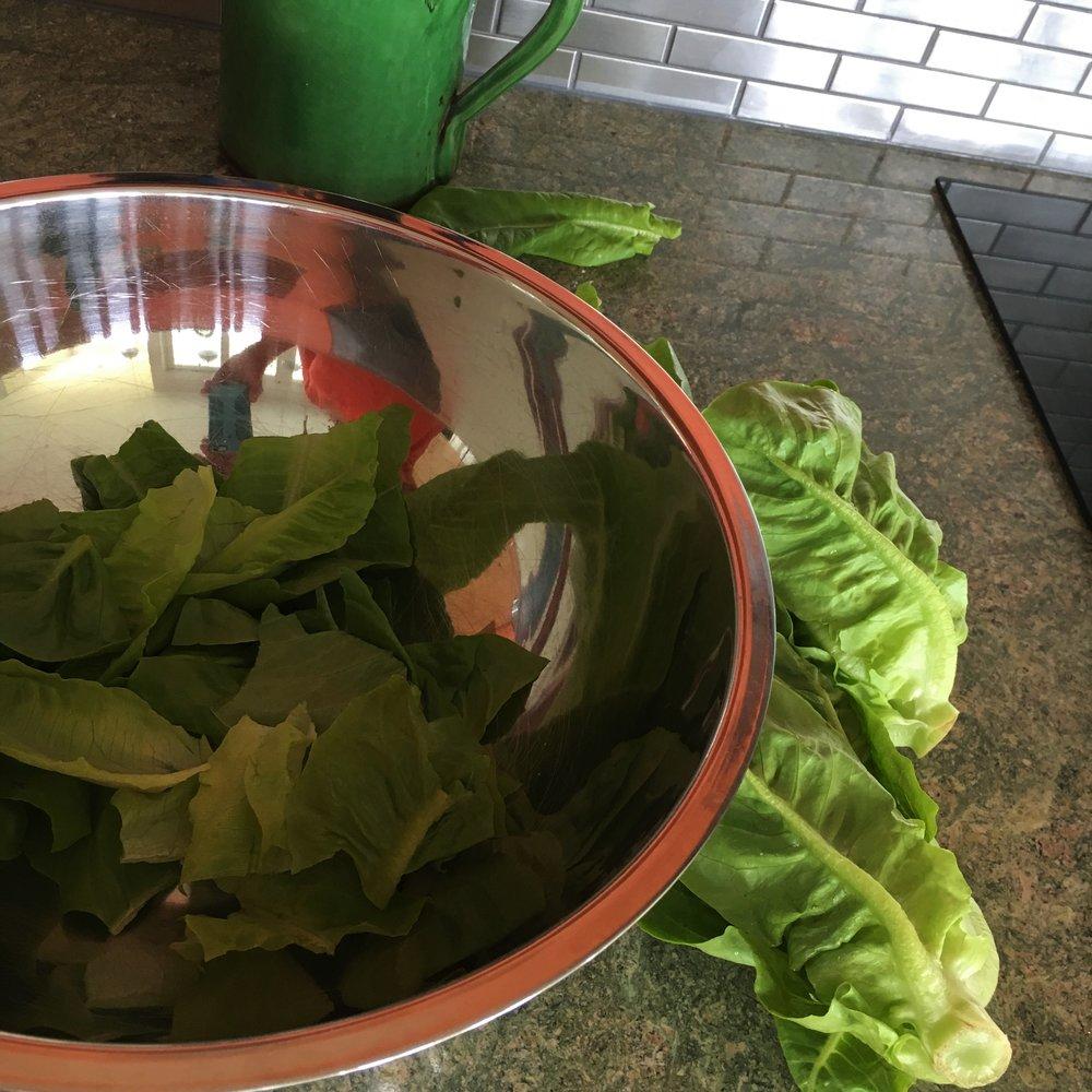 Salad days 1.jpg