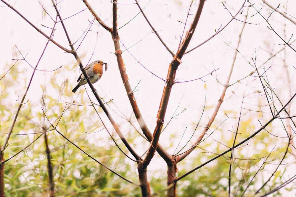 Hexham-Winter-Gardens-Wedding-Photos-61.jpg