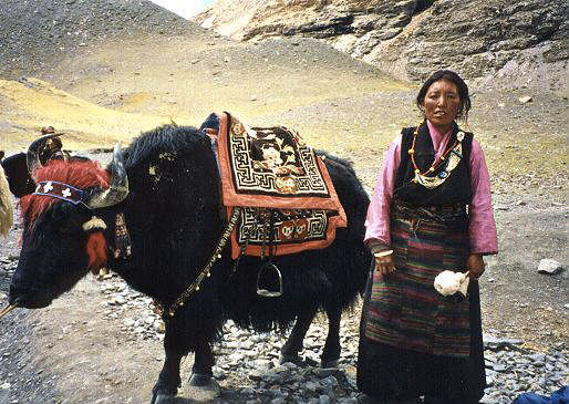 Tibetan woman with her yak - image source viaTravel Watch