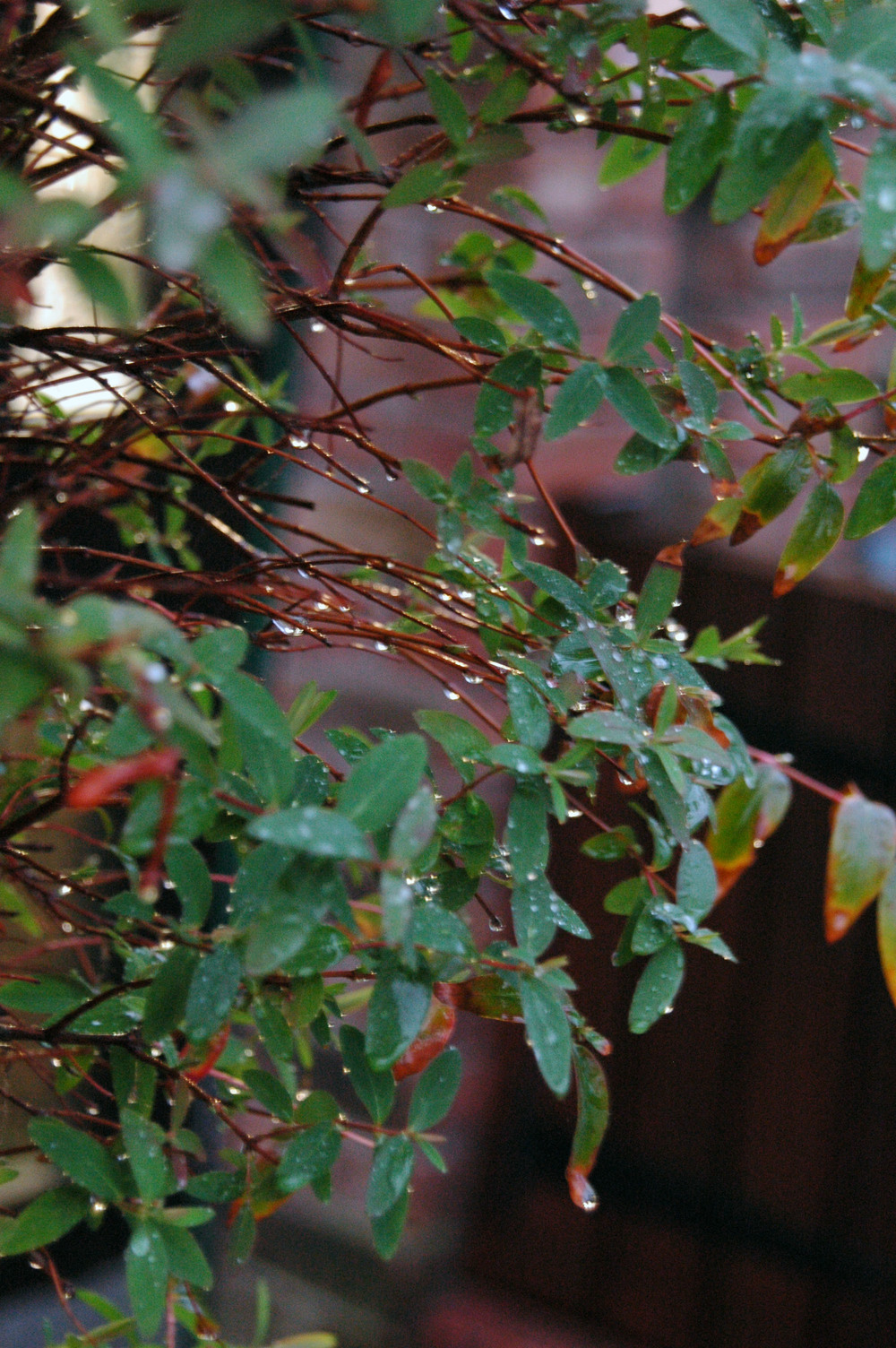 Rainy day colour
