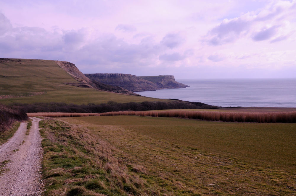 Spring Approaching on the Isle of Purbeck