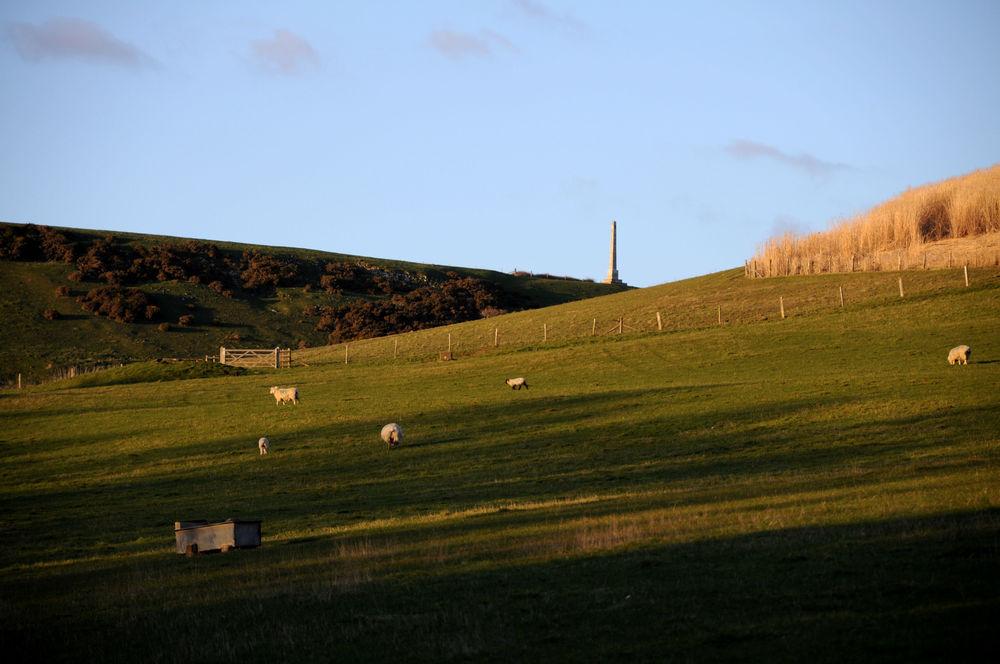 Sheep on the Isle golden light