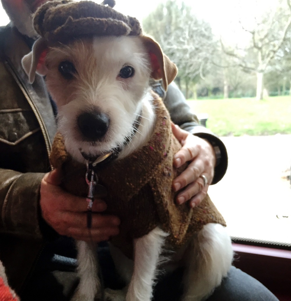 Terrier in hand knit