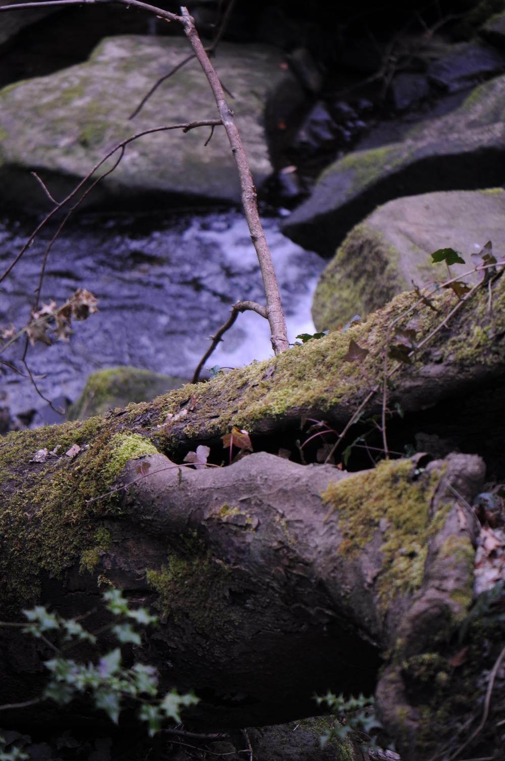 tree stumps and stream