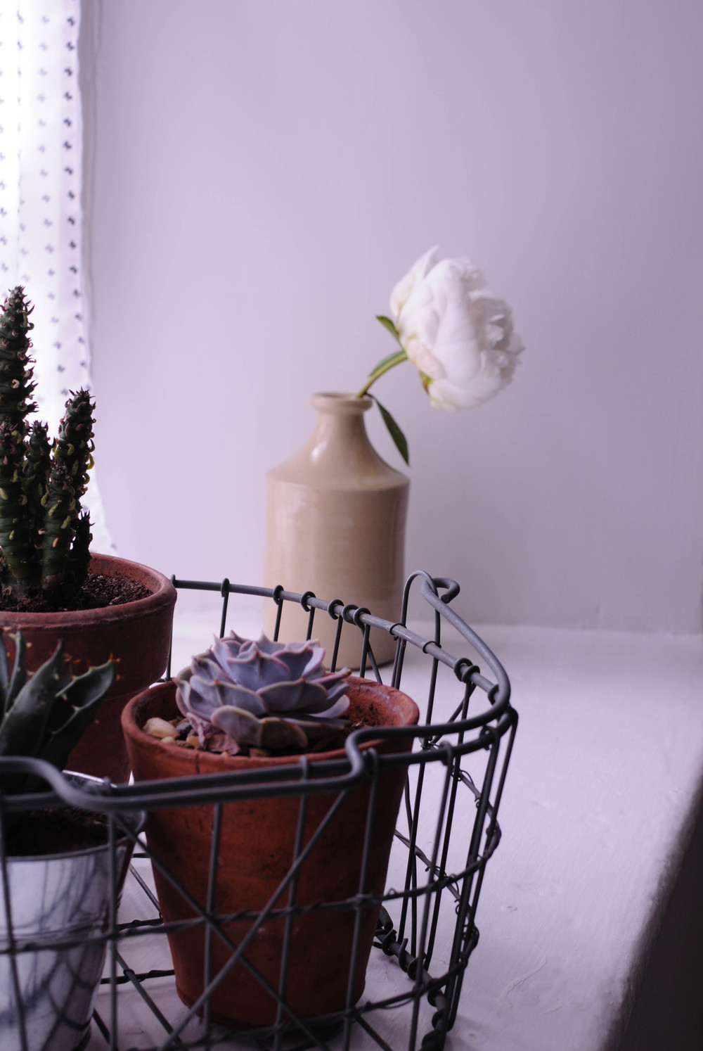Botanicals in my home-2.jpg