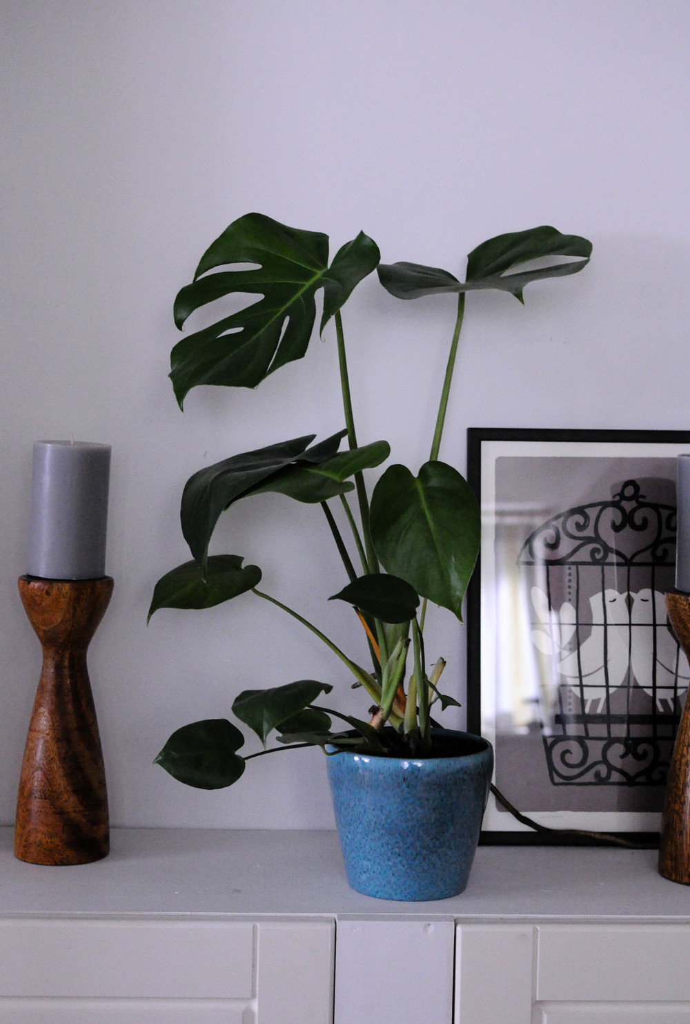 Botanicals in my home-1.jpg
