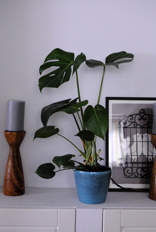 Botanicals in my home-1.jpg