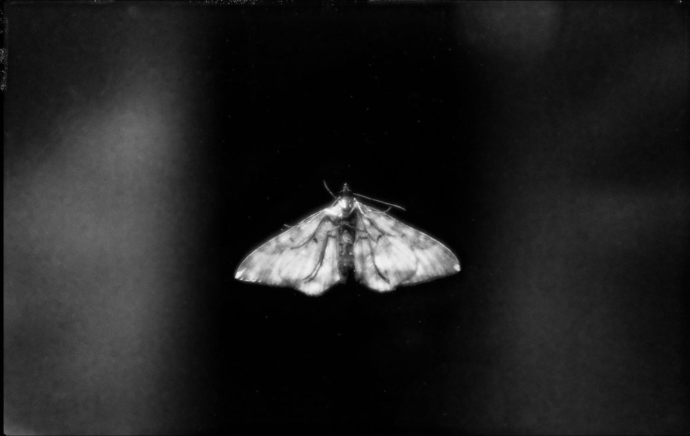 Moth-copy3-WEB.jpg