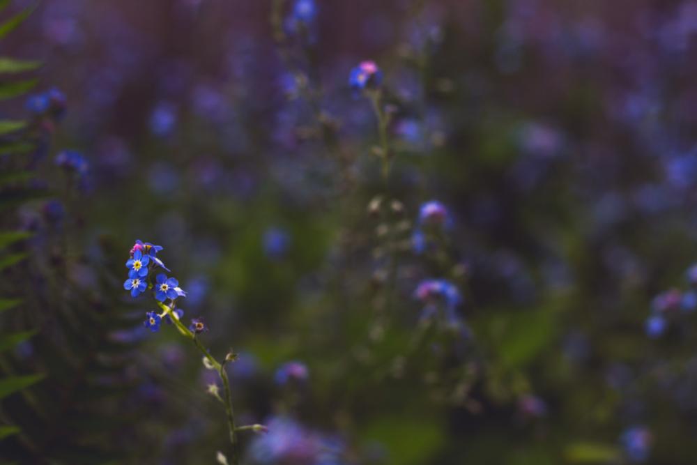 13 may 14th 2014 garden.jpg