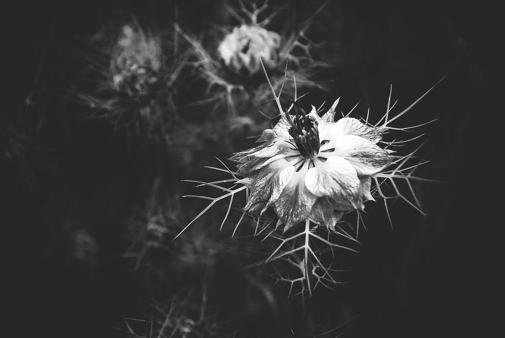 1 edgefields pokey flower 3 bw   may 2010jen ryan photography.jpg