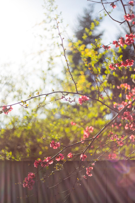 march flowers amiabelle 2015 jenny ryan-10.jpg