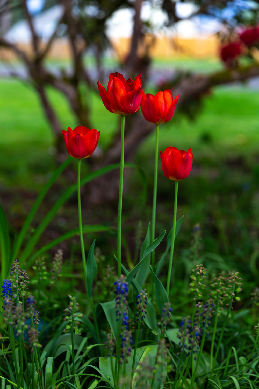 may 7 otis garden flowers oly 2018 5 star edits jenny l miller (14 of 368).jpg