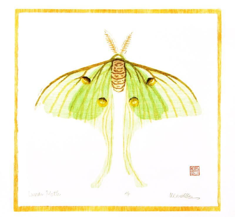 "Lunar Moth Reduction Woodcut | 14x14"""