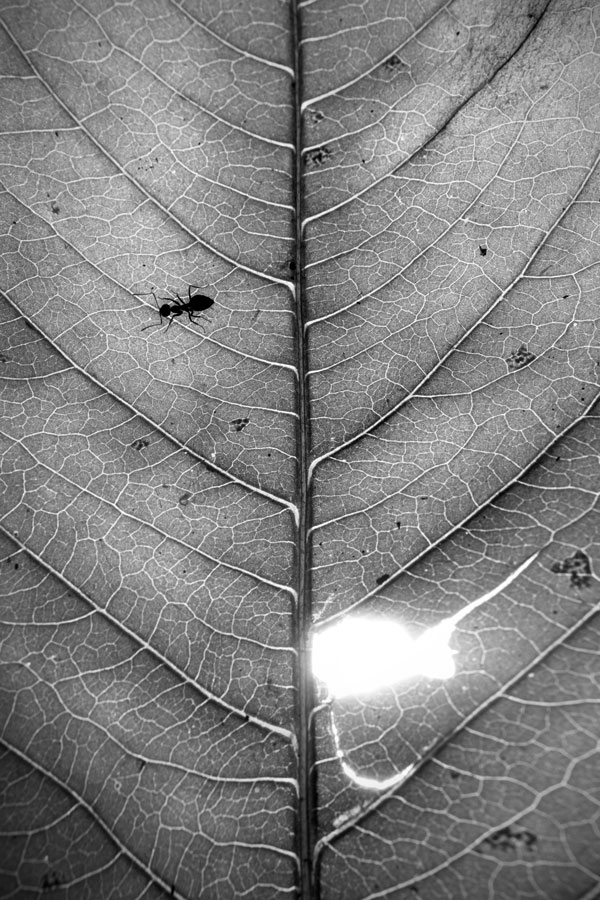 Leaves provide some simple nutrition for simple animals. Ants feed on living leaves all across forests' floors.