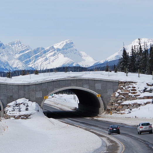 Banff Highway Animal Overpasses    High Country News--Aug. 11, 2013   Banff National Park has several bridges and culverts to wildlife cross highways. A new study shows the overpasses are helping maintain genetic diversity in the park's bears.   Photo  Wildlife crossing 4  by Adam Fagan,  CC BY-NC-SA 2.0