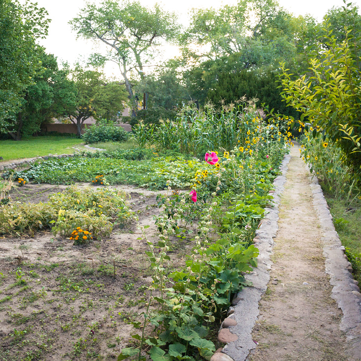 Georgia O'Keeffe's Garden, Revisited    Edible Santa Fe--April 1, 2015   Since 1986, Georgia O'Keeffe's garden in Abiquiu has remained fallow, but in 2014, high school interns from the local community helped to revive the rich soil which has nourished people for centuries.