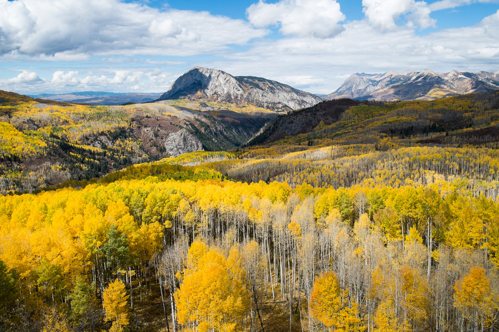 Southwest's Threatened Aspens    Dorado--February 2017   In the mountains of the West, the world's largest and possibly longest-living organisms have thrived for thousands of years. These ancient groves of quaking aspens may also be dying.
