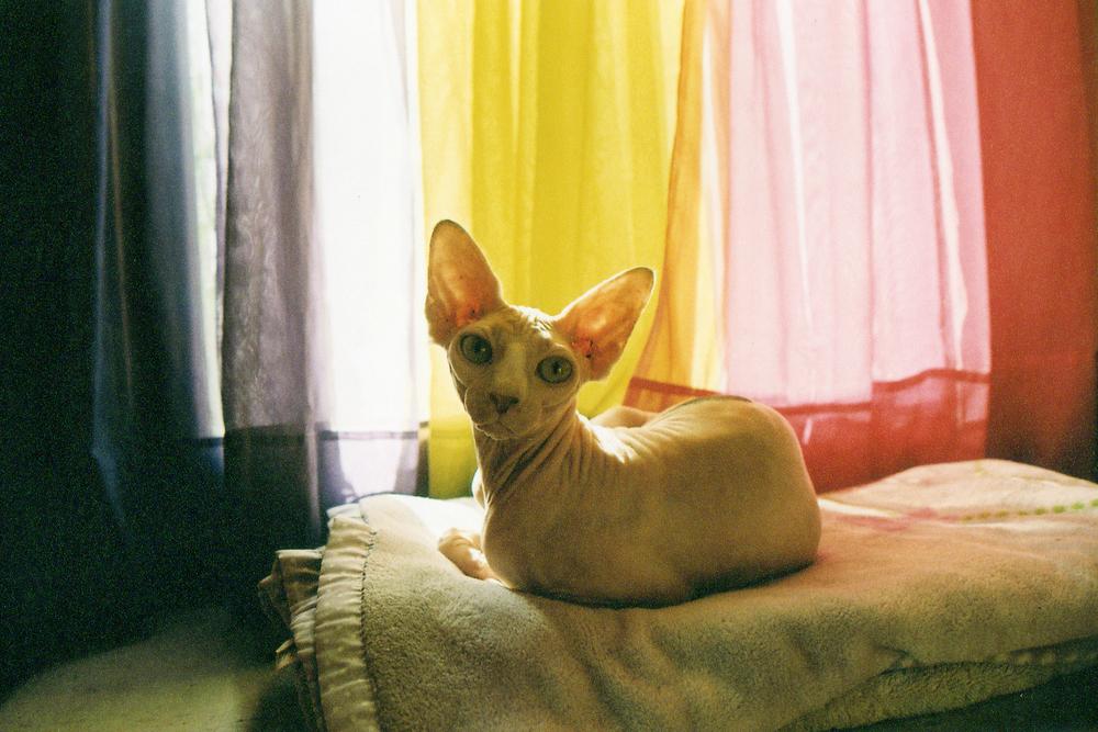 baldcat.jpg