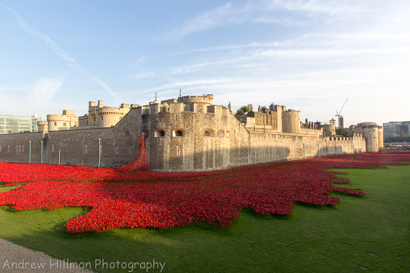 Ceramic poppies at the Tower of London - Reference UK13